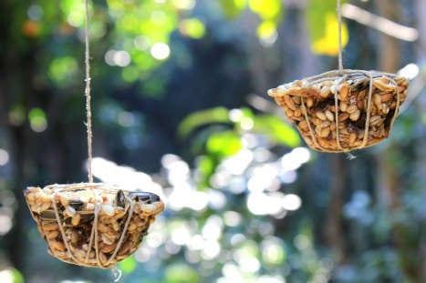 Transportkooi vogels maken