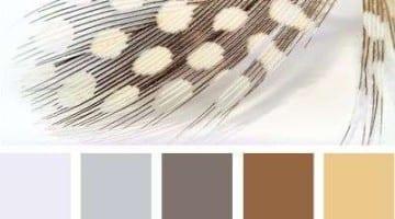 Kleurinspiratie veren
