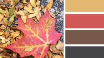 Herfstbladeren kleurenpalet
