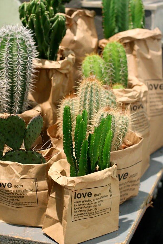 Cactussen in paperbag
