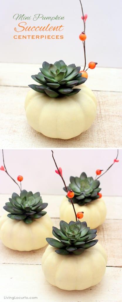 Kleine pompoen met vetplant