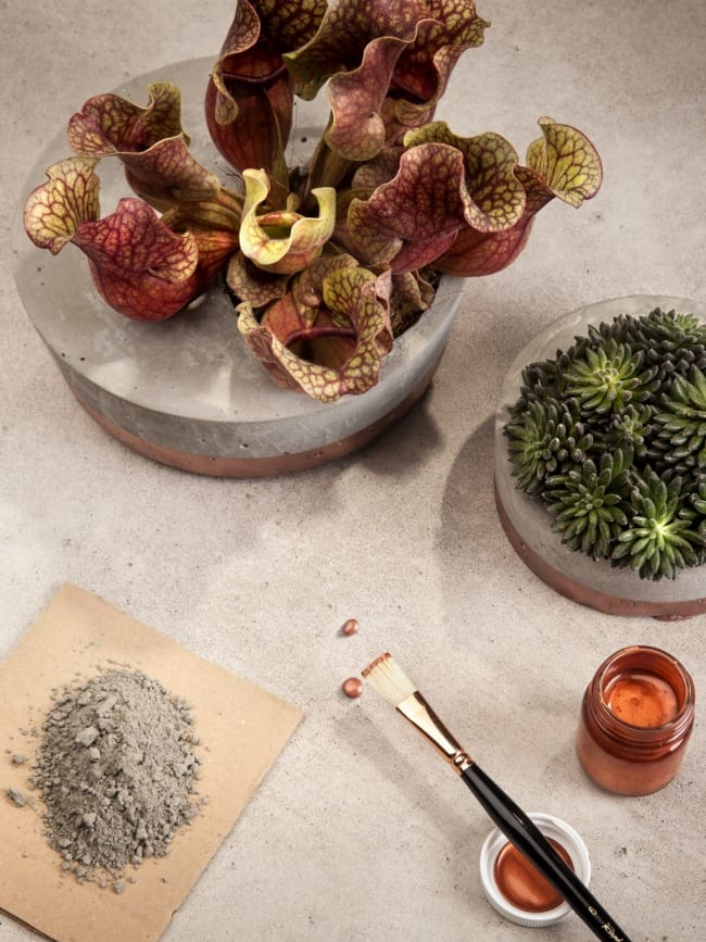 DIY cementen plantenbak