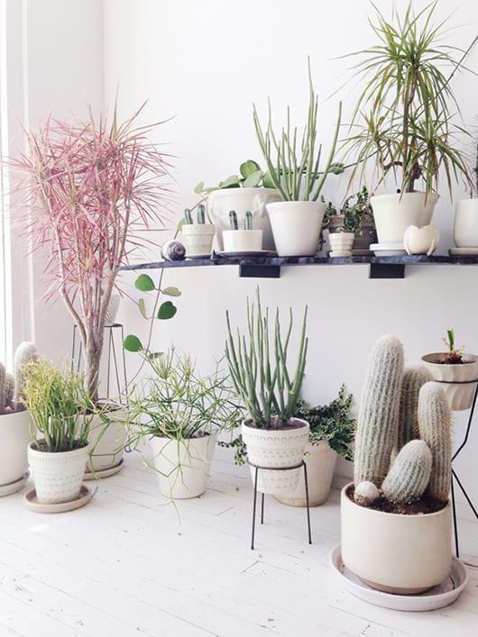 Collectie planten op standaard