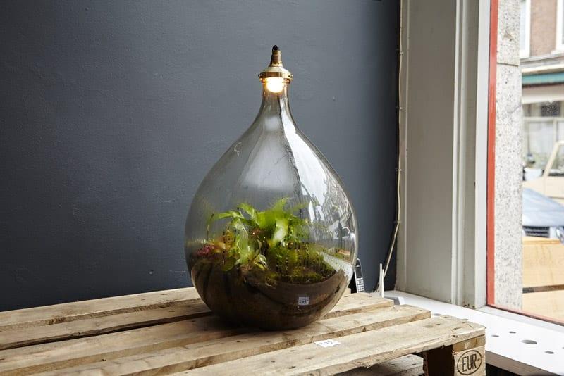 Terrarium spruitje