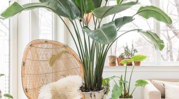De hipste kamerplanten op een rij