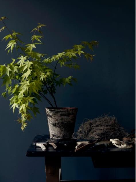 Donkerblauw met woonplant