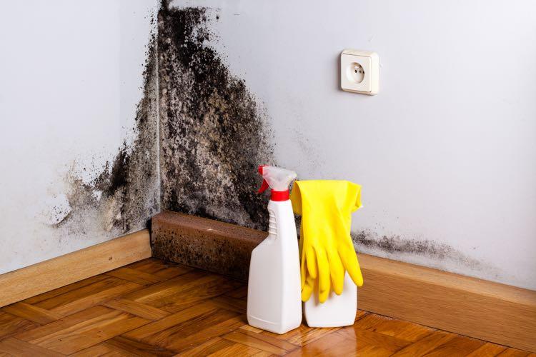 Schimmels schoonmaken