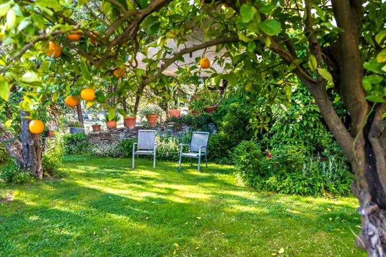 Betere Een fruitboom in je tuin of op je dakterras - Woontrendz SL-53