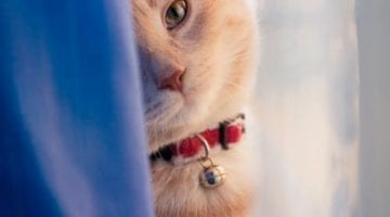 De kat in de gordijnen, wat doe je eraan?
